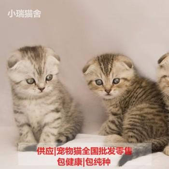 购置宠物小猫 天下宠物猫出售 福州市鼓楼区蓉彩美容院