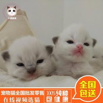 宠物批发厂家_国内加菲猫价格_福州市鼓楼区蓉彩美容院