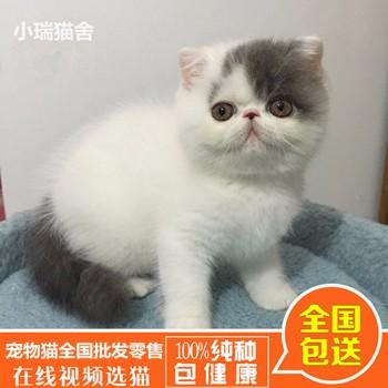 58同城宠物猫零售_短毛猫价钱_福州市鼓楼区蓉彩美容院