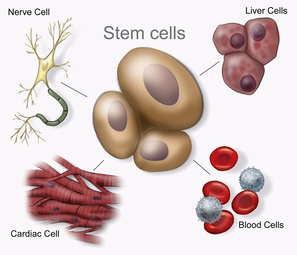 提供干细胞服务_哪里有其他医用材料