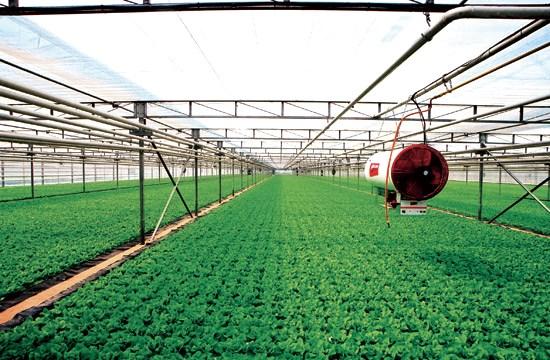 智慧农业物联网方案_专业农业大棚