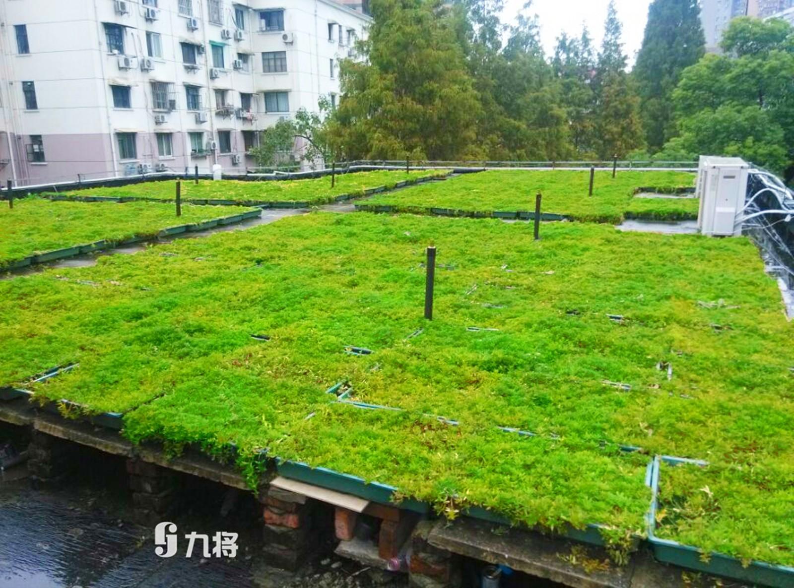 生态墙价格/优质屋顶绿化设计/上海九将农业科技有限公司