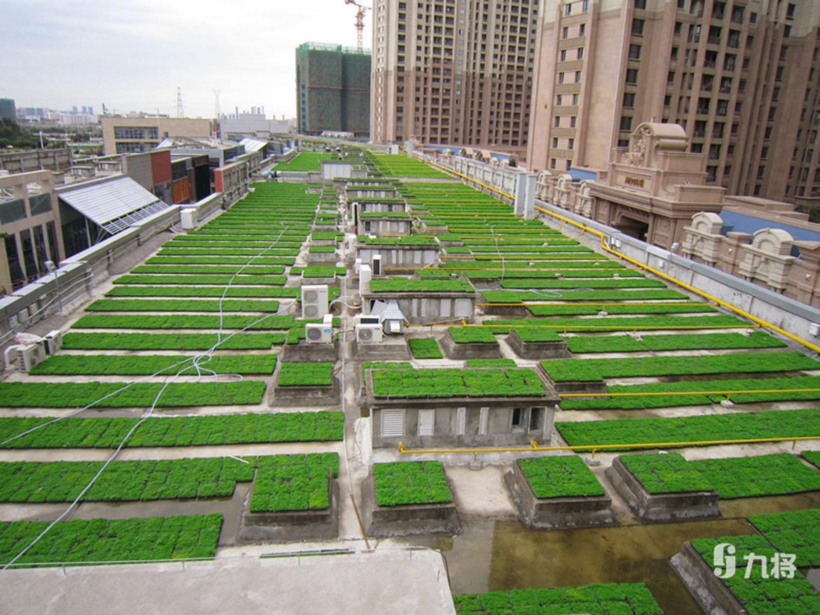室内外生态墙设计/专业绿化墙/上海九将农业科技有限公司