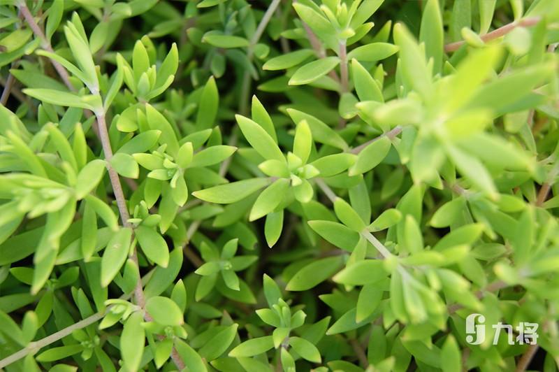 上海绿化墙施工-室外绿植墙-上海九将农业科技无限公司