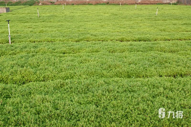 垂直绿化价钱/室表里绿植墙设计/上海九将农业科技无限公司