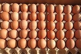 保洁鸡蛋批发采购价格_行业信息网