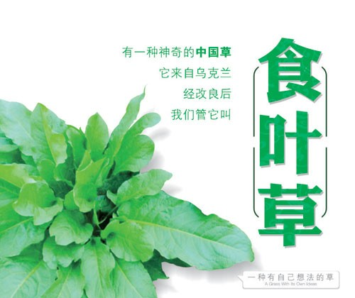 食叶草作用_军信其他新鲜蔬菜-北京中农食叶草自然科学研究院